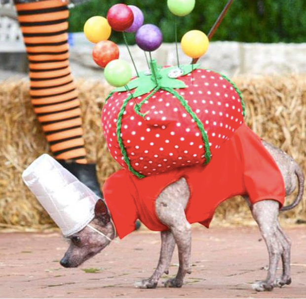halloween_costumes_for_pets_2